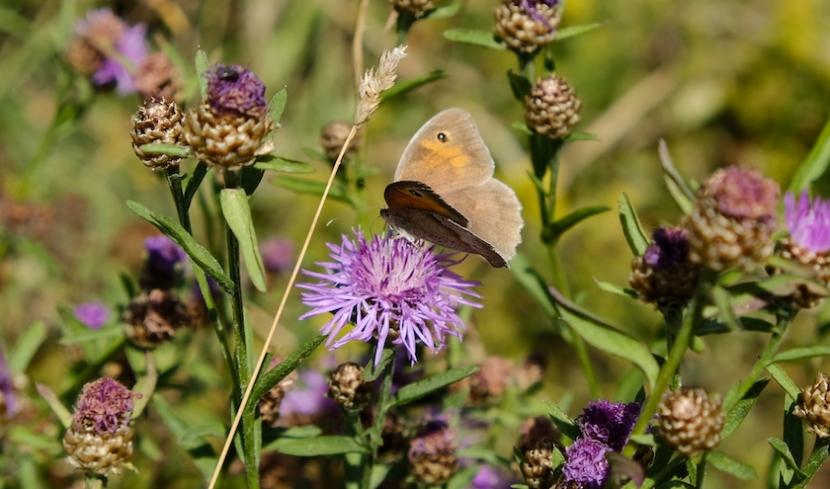 Schmetterling sitzt auf einer Blume