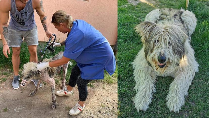 Ein Hund, der von der Straße geholt wird (links) und wie er sich durch die Adoption positiv verändert hat (rechts).