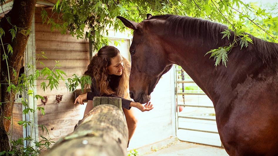 Dolmetschen zwischen Mensch und Pferd
