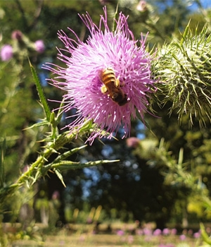 Bienenfreundliches Gartenparadies