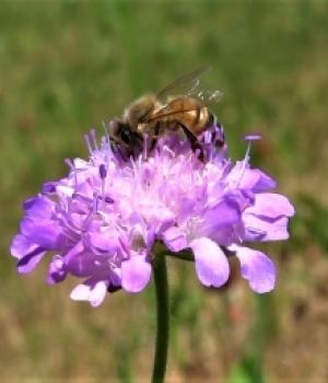 Honig im Herzen