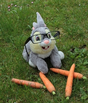 ... oder hast du schon mal einen Hasen mit Brille gesehen?