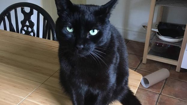 Arme schwarze Katze