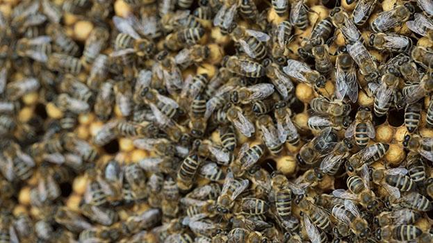 Wo Teer und Honig fließen