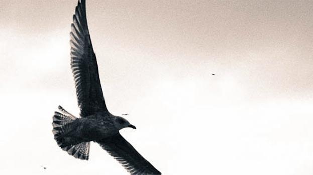 Faszination Fliegen