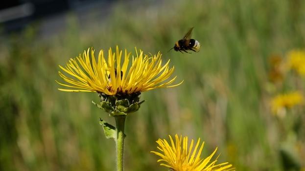 Insektensterben: Was wir dagegen tun können