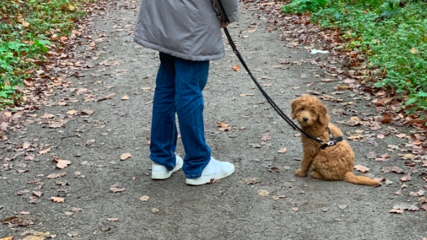 Ein Hund für zwischendurch