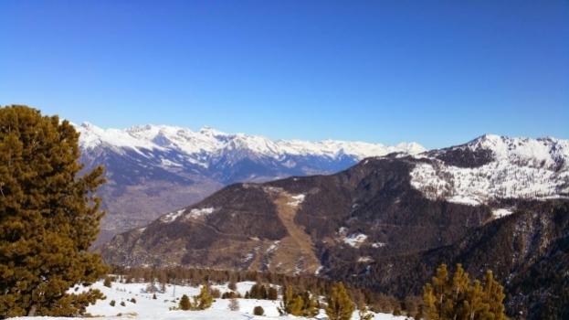 Tiere und Pflanzen wandern in höhere Alpengebiete